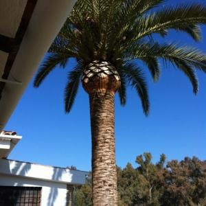 poda de palmeras galeria 3