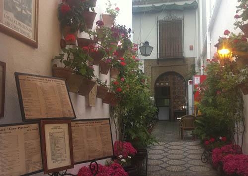 Terrazas y patios - Jardinería y Paisajimo Moisés J. León