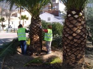 Cortar Palmera en Córdoba - Jardinería y Paisajismo Moisés León